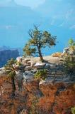 峡谷全部唯一结构树 库存图片