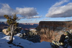 峡谷全部场面冬天 库存照片