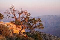 峡谷全部结构树 免版税库存照片