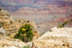 峡谷全部视图 免版税库存照片