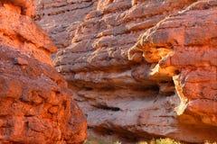 峡谷内华达猫头鹰白色 免版税库存照片