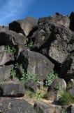 峡谷印第安刻在岩石上的文字rinconada 库存图片