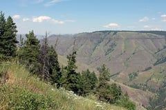 峡谷在一个晴朗的夏日俯视 免版税库存图片