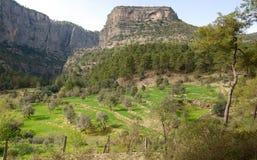 峡谷在土耳其和杉木树丛 免版税库存图片