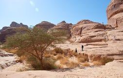 峡谷在考古学站点Madain萨利赫沙特阿拉伯 免版税库存照片
