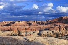 峡谷地国家公园针区 免版税图库摄影