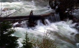 峡谷小河春天 库存图片