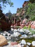 峡谷小河橡木 库存图片