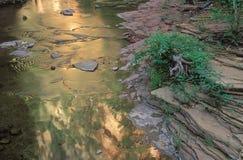 峡谷小河橡木 免版税图库摄影