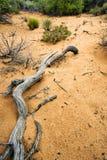 峡谷沙丘路径沙子雪向犹他 免版税图库摄影