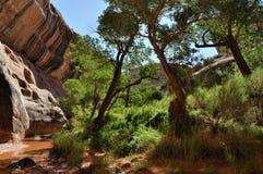 峡谷沙漠绿洲 免版税库存照片