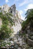 峡谷流动的小河 库存照片