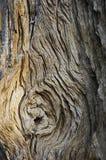 峡谷深深变干了树干 免版税库存照片