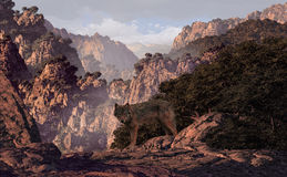 峡谷狼 图库摄影