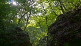 峡谷的植被 影视素材