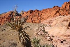 峡谷红色岩石 库存图片