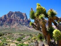 峡谷约书亚红色岩石结构树 免版税库存照片