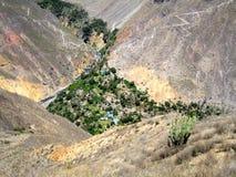 峡谷绿洲 库存照片