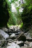峡谷绿色 图库摄影