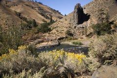 峡谷美洲狮naches河华盛顿yakima 库存图片