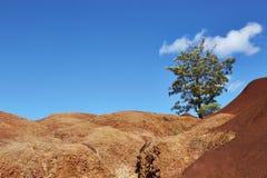 峡谷考艾岛waimea 免版税图库摄影