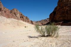 峡谷色的沙漠西奈 免版税库存图片