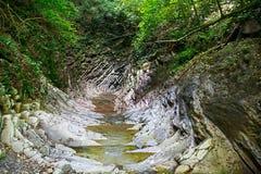 峡谷长满与青苔和常春藤与山小河的流动的小河 图库摄影