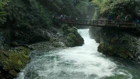 峡谷Blejski Vintgar看法用美丽的清楚和速度水 股票录像