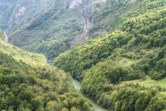 峡谷montenegro塔拉 免版税库存照片