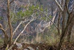 峡谷Sumidero,恰帕斯州,墨西哥 免版税库存图片