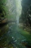 峡谷vintgar的斯洛文尼亚 免版税库存照片
