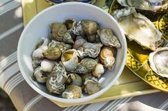 峨螺, bulot,海洋蜗牛,在小在桌上的一个碗 免版税库存图片
