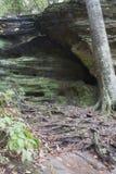 峭壁和树根,Hocking小山状态森林 库存照片