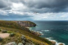 峭壁和海鸥, Pleherel (法国) 免版税库存图片