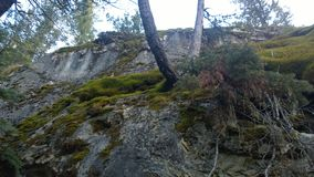 峭壁墙壁在森林里 免版税库存照片