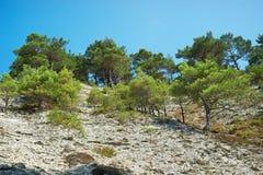 峭壁岩石树和石头  免版税库存图片