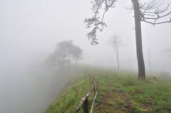 峭壁森林杉木 免版税库存照片