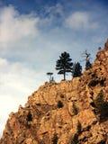 峭壁科罗拉多杉树 免版税库存图片