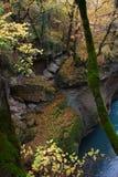 峭壁长满与树、青苔和常春藤在黄色叶子 免版税库存图片