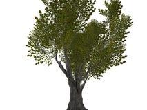 峭壁顶部结构树 库存图片