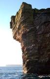 峭壁gannet 免版税库存照片