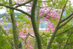 峰值结构树 免版税库存图片