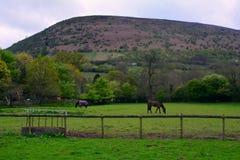 峰顶/小山和吃草马在农场,在黑山附近,布雷肯比肯斯山,威尔士,英国 库存照片