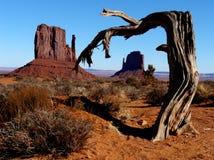崎岖的结构树 图库摄影