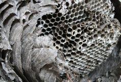 嵌套纸质黄蜂 库存照片