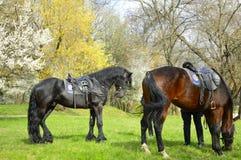 巡逻马在公园 库存图片