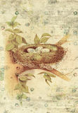 巢和鸟蛋植物的葡萄酒样式墙壁艺术有织地不很细背景 免版税库存图片