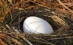 巢和鸡蛋 库存图片