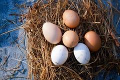 巢用有机鸡蛋 图库摄影
