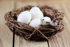 巢用白鸡蛋和两只鸟 免版税库存图片